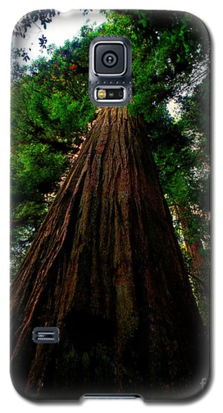 Prairie Creek Redwoods State Park 13 Galaxy S5 Case
