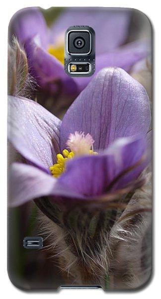 Prairie Crocus Galaxy S5 Case