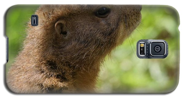Prairie Dog Portrait Galaxy S5 Case