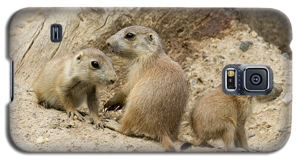 Prairie Dog Pups Galaxy S5 Case