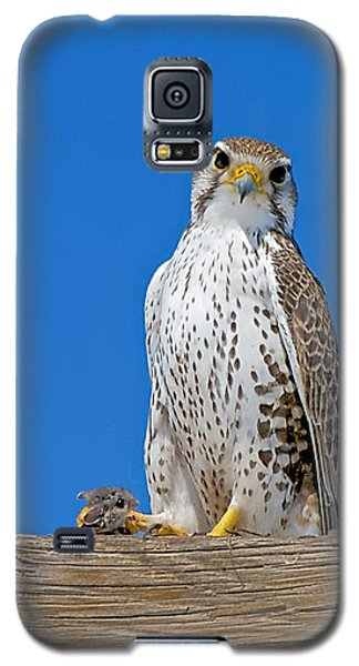 Prairie Falcon With Mouse Galaxy S5 Case