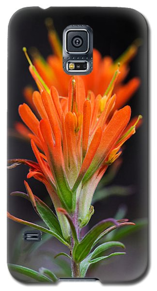 Prairie Paintbrush Flower Galaxy S5 Case