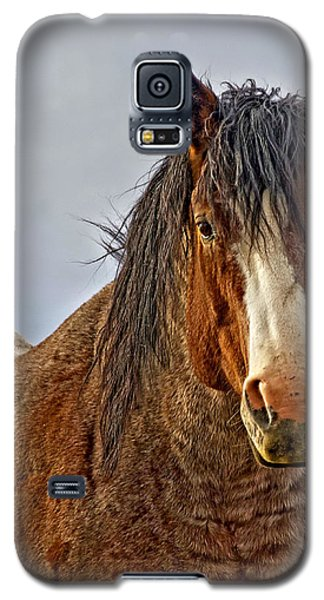 Galaxy S5 Case featuring the photograph Winter's Edge by Amanda Smith