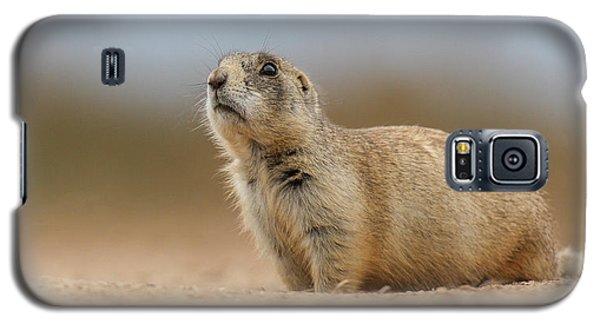 Prarie Dog  Galaxy S5 Case