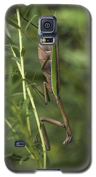 Praying Mantis 001 Galaxy S5 Case