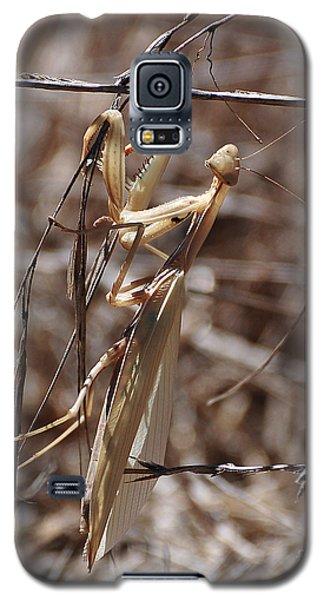 Praying Mantis Blending In Galaxy S5 Case