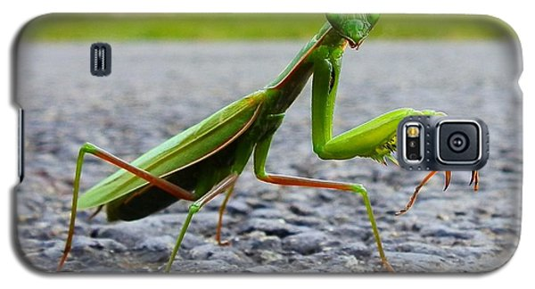 Praying Mantis Galaxy S5 Case by Carolyn Cable