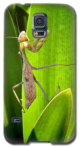 Galaxy S5 Case featuring the photograph Praying Mantis by Kasia Bitner