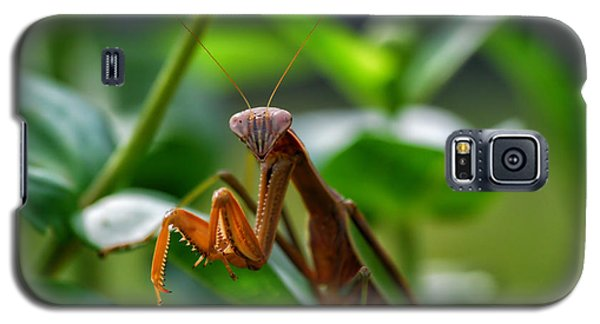 Galaxy S5 Case featuring the photograph Praying Mantis by Thomas Woolworth