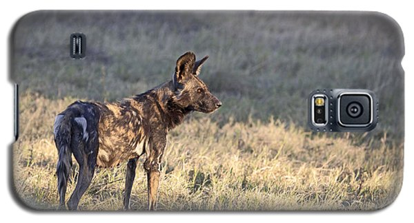 Galaxy S5 Case featuring the photograph Pregnant African Wild Dog by Liz Leyden