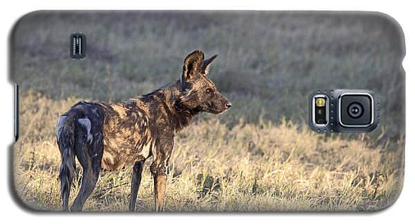 Pregnant African Wild Dog Galaxy S5 Case