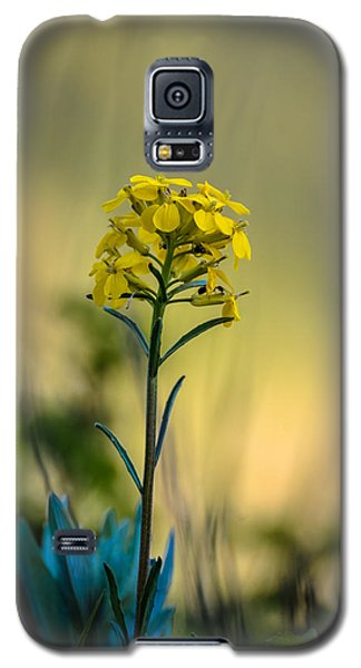 Pretty As A Wallflower Galaxy S5 Case