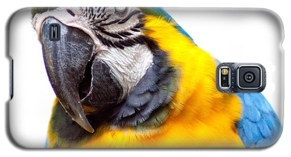 Galaxy S5 Case featuring the photograph Pretty Bird by Roselynne Broussard