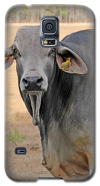 Galaxy S5 Case featuring the photograph Pretty Brahma by Dodie Ulery