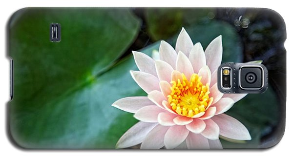Pretty In Pink Galaxy S5 Case by Dave Files