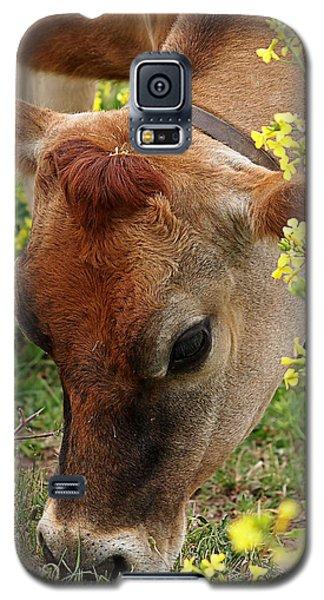 Pretty Jersey Cow Square Galaxy S5 Case