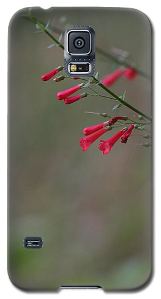 Galaxy S5 Case featuring the photograph Pretty Little Penstemon by Ruth Jolly