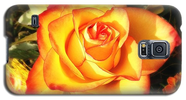Orange Galaxy S5 Case - Pretty Orange Rose by Matthias Hauser