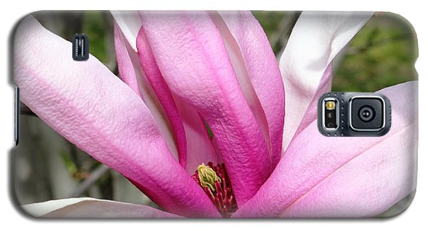 Galaxy S5 Case featuring the photograph Pretty Pink Magnolia by Judy Palkimas
