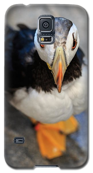 Galaxy S5 Case featuring the photograph Pretty Puffin by Jennifer Casey