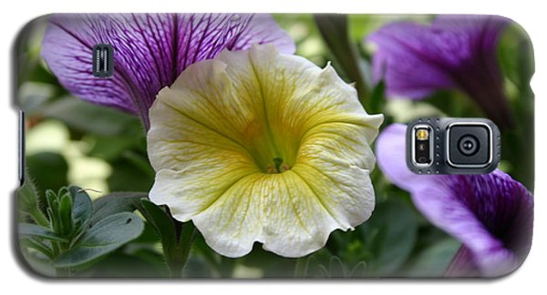 Pretty Yellow And Purple Petunias Galaxy S5 Case
