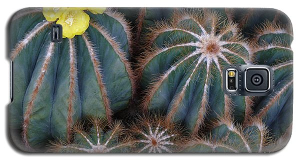 Galaxy S5 Case featuring the photograph Prickly Beauties by Evelyn Tambour