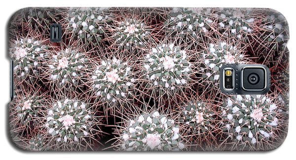 Galaxy S5 Case featuring the photograph Prickly Business by Mary Bedy