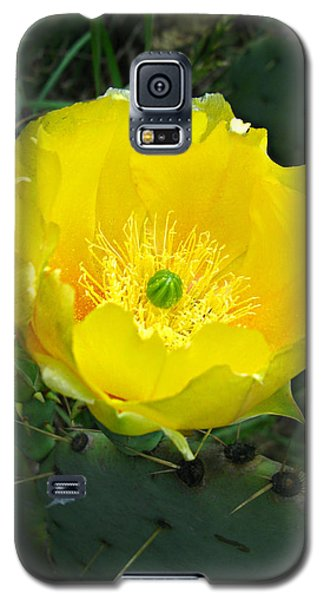 Galaxy S5 Case featuring the photograph Prickly Pear Cactus by William Tanneberger