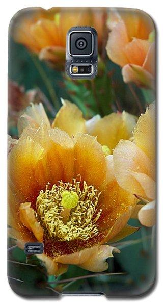 Prickly Pear Cactus Galaxy S5 Case