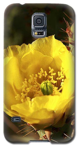 Galaxy S5 Case featuring the photograph Prickly Pear Flower by Alan Vance Ley