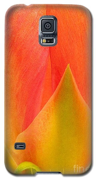 Galaxy S5 Case featuring the photograph Prickly Pear Flower Petals Opuntia Lindheimeni In Texas by Dave Welling