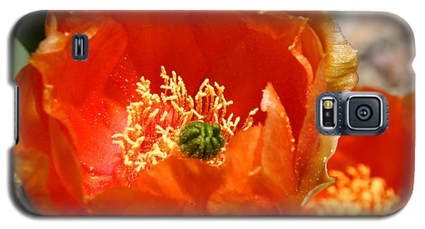 Prickly Pear In Bloom Galaxy S5 Case