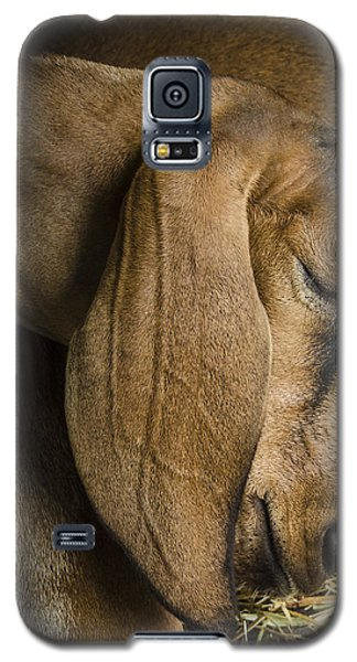 Pride Of The Shepherd Galaxy S5 Case