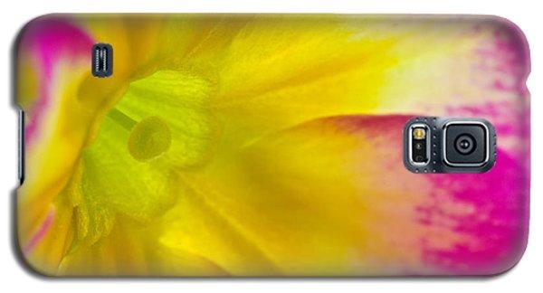 Primrose Glow Galaxy S5 Case by Joan Herwig
