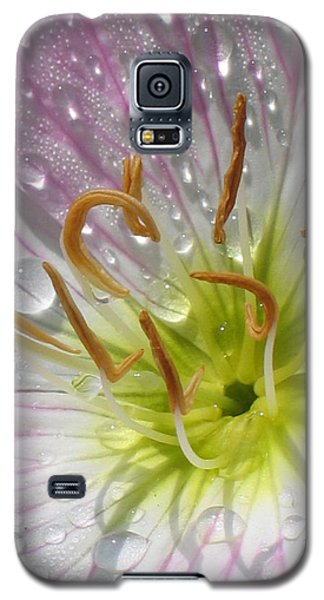 Primrose Galaxy S5 Case by Jennifer Wheatley Wolf