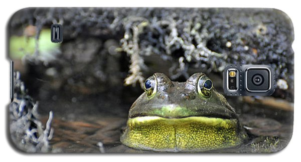 Galaxy S5 Case featuring the photograph Bullfrog by Glenn Gordon