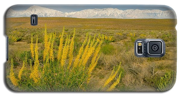 Princes Plume And Mount Tom - Spring Wildflowers Owens Valley Eastern Sierra California Galaxy S5 Case