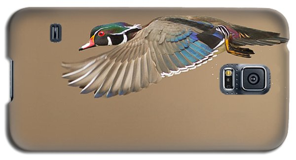 Probably The Most Beautiful Of All Duck Species Galaxy S5 Case by Mircea Costina Photography