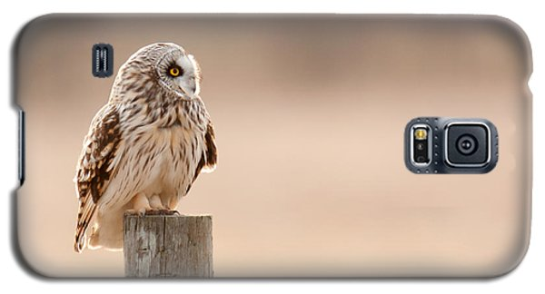 Galaxy S5 Case featuring the photograph Profile Of A Short-eared Owl 1 by Timothy McIntyre