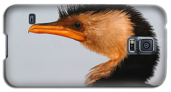 Profile Of A Young Cormorant Galaxy S5 Case