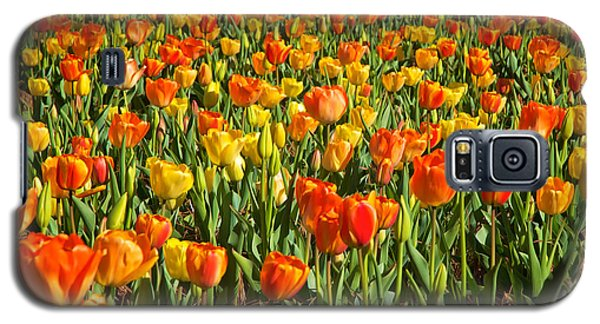 Profusion Of Tulips Biltmore Estate Nc Galaxy S5 Case