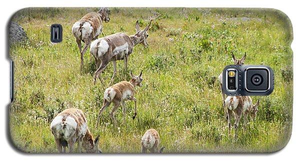 Pronghorn Antelope In Lamar Valley Galaxy S5 Case by Belinda Greb