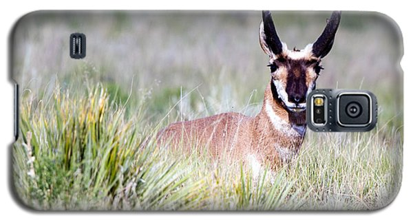 Pronghorn Buck In Prairie Grasses Galaxy S5 Case