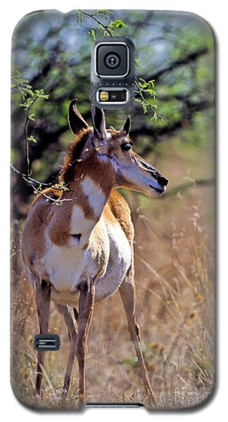 Pronghorn In Spring Galaxy S5 Case