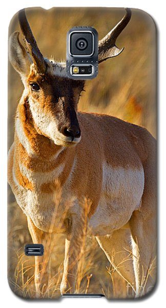 Galaxy S5 Case featuring the photograph Pronghorn by Aaron Whittemore
