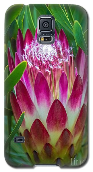 Protea In Pink Galaxy S5 Case