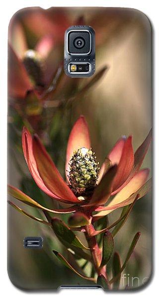 Protea  Galaxy S5 Case