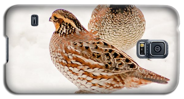 Protective Quail Galaxy S5 Case by Dawn Romine