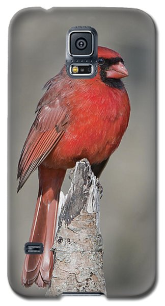 Proud Cardinal Galaxy S5 Case