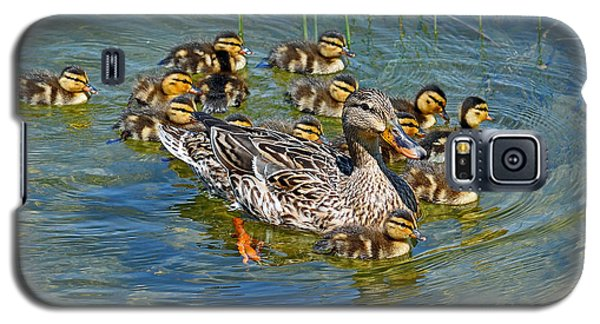 Galaxy S5 Case featuring the photograph Proud Mother by Rodney Campbell